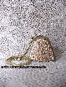 Brass-Plated Keychain Bell