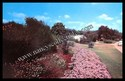 Botanic Gardens-Trinity Park-Ft. Worth, Texas