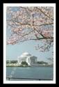 Jefferson Memorial - Washington, D.C.