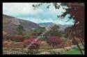 Royal Botanic Gardens - Jamaica
