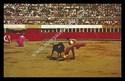 Bull Fight Scene - Tijuana, Mexico